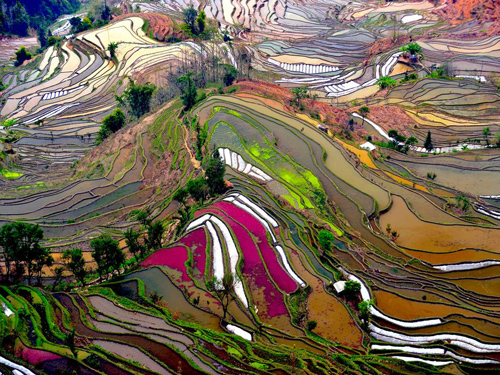rice_paddies.jpg